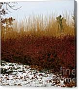 Red Gold Hedge Canvas Print