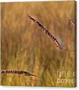 Red Grass Canvas Print