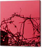 Red Haze Canvas Print