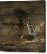 Red Head Duck Old Box Canvas Print