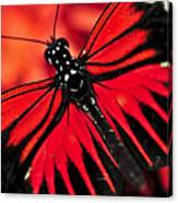 Red Heliconius Dora Butterfly Canvas Print