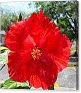 Red Hibiscus In The Neighborhood Canvas Print