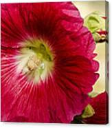Red Hollyhock Althaea Rosea Canvas Print