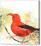 I'iwi - Hawaiian Red Honeycreeper Canvas Print