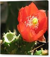 Hot Red Cactus Canvas Print