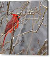 Red Hot In A Snowstorm Canvas Print