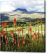 Red Hot Pokers Of The Andes Canvas Print