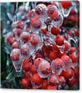 Red Ice Berries Canvas Print