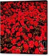 Red Impatiens Flowers Canvas Print