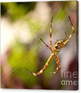 Red Invisible / Invisible Web  Canvas Print