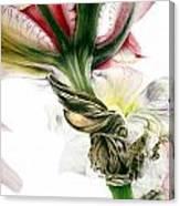 Red Iris Canvas Print