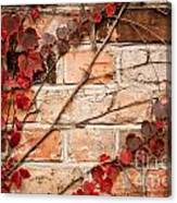 Red Ivy Leaves Creeper Canvas Print