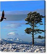 Red Kite Canvas Print