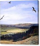 Red Kites At Coombe Hill Canvas Print