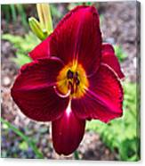Red Lady Lily 2 Canvas Print
