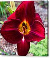 Red Lady Lily 4 Canvas Print