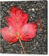 Red Leaf On Pavement Canvas Print