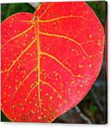 Red Leaf With Yellow Veins Canvas Print