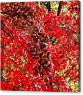Red Leaves 3 Canvas Print