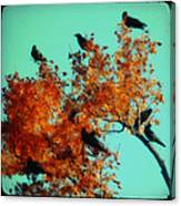 Red Leaves Among The Ravens Canvas Print