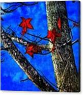 Red Leaves Blue Sky In Autumn Canvas Print