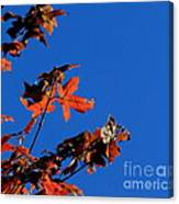 Red Leaves Blue Sky Canvas Print