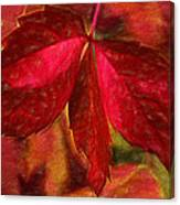 Red Leaves - Cave Dwelle Canvas Print