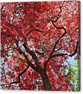 Red Leaves On Tree Canvas Print