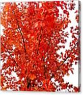 Red Lights Canvas Print