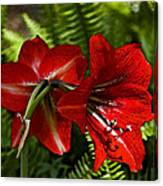 Red Lilies For Spring Canvas Print