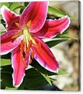 Red Lilly 8095 Canvas Print