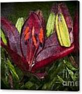 Red Lily 5 Canvas Print