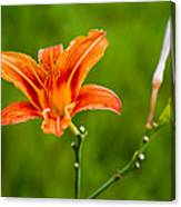 Red Lily - Featured 3 Canvas Print