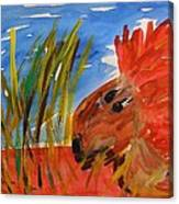 Red Lion In Tall Yellow Grass Canvas Print