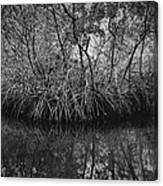 Red Mangroves Number 1 Canvas Print