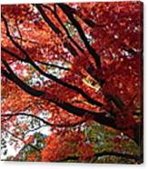Red Maple 01 Canvas Print