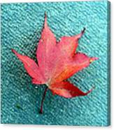 Red Maple Blue Canvas Print