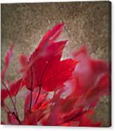 Red Maple Dreams Canvas Print