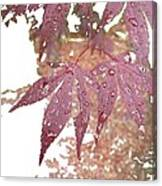 Red Maple Kissed By Water Canvas Print