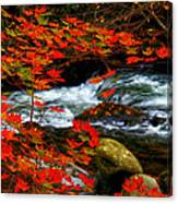 Red Maple Stream  Canvas Print