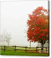 Red Maple Tree And A Split-rail Fence Canvas Print