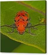 Red Milkweed Beetle Canvas Print