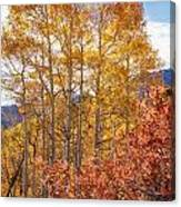 Red Oak Brush And Golden Aspens Canvas Print