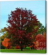 Red Oak In Loose Park Canvas Print