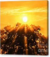 Red Oak Sunrise Fog Canvas Print