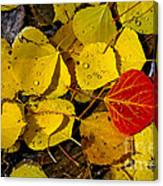 Red On Yellow Canvas Print