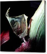 Red Onion In The Dark Canvas Print