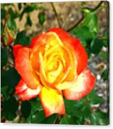 Red Orange And Yellow Rose Canvas Print