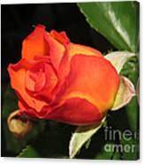 red orange Baby Rose Canvas Print