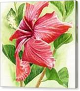 Red Orange Hibiscus Canvas Print